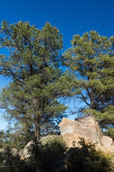17955 W. Buckhorn Dr., Peeples Valley, AZ 86332 Photo 9