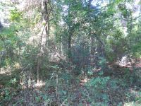 Home for sale: 00 Carpenter Cemetery Rd., Grand Ridge, FL 32442