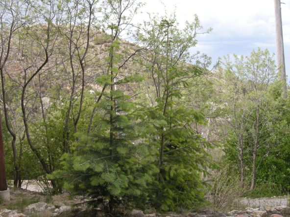 12949 N. Guthrie N, Mount Lemmon, AZ 85619 Photo 30