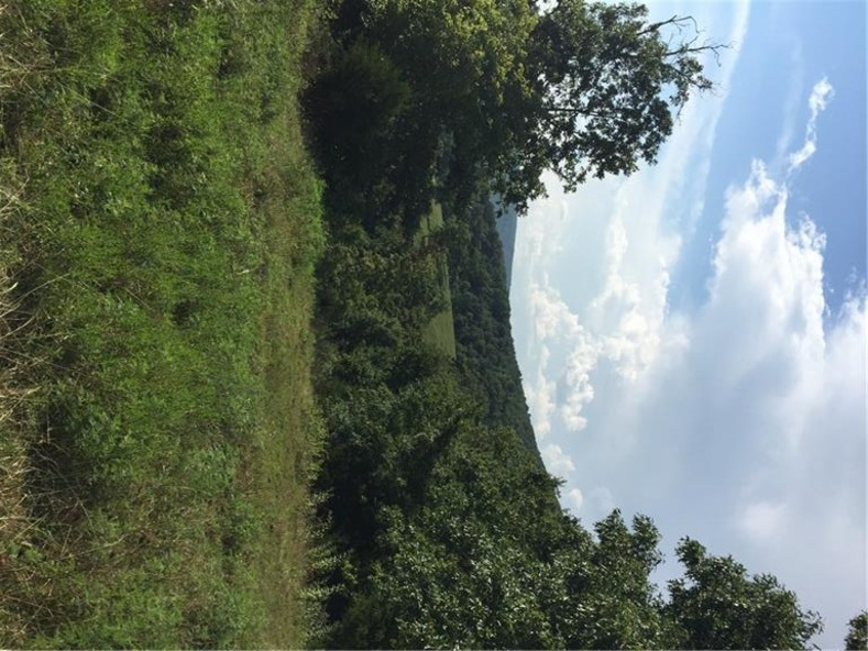 20745 S. Hwy. 103, Green Forest, AR 72638 Photo 10