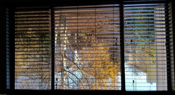 3100 Ward Pl., Anchorage, AK 99517 Photo 10