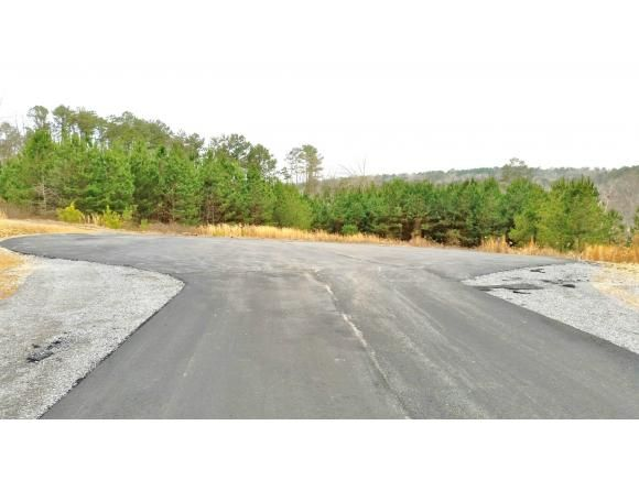 224 Co Rd. 907 (Lot 8), Crane Hill, AL 35053 Photo 4