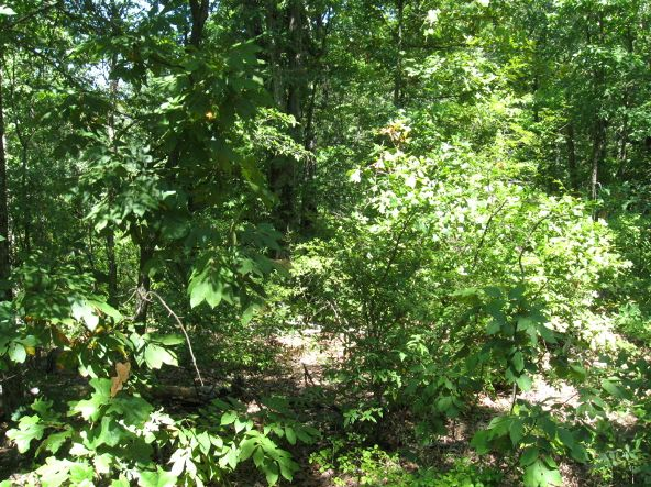 16.38 Acres Layer Ln., Harrisburg, AR 72432 Photo 5