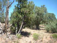 Home for sale: 0000 Hyde Park, Seligman, AZ 86337