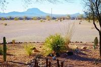 Home for sale: 40610 W. Elliot Rd., Tonopah, AZ 85354