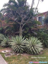 Home for sale: 2160 White Pine Cir. Apt D, Greenacres, FL 33415