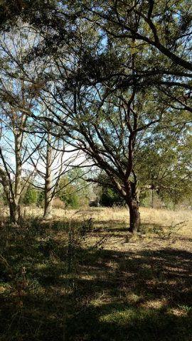 24217 County Rd. 87, Robertsdale, AL 36567 Photo 4