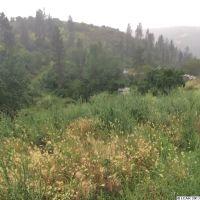 Home for sale: 0000 Coyote Creek Ln., Culdesac, ID 83524