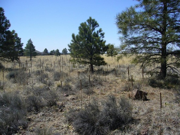 10558 E. White Horse Lake, Parks, AZ 86018 Photo 17