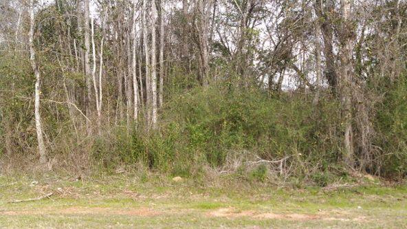 1 County Rd. 40, Abbeville, AL 36310 Photo 2