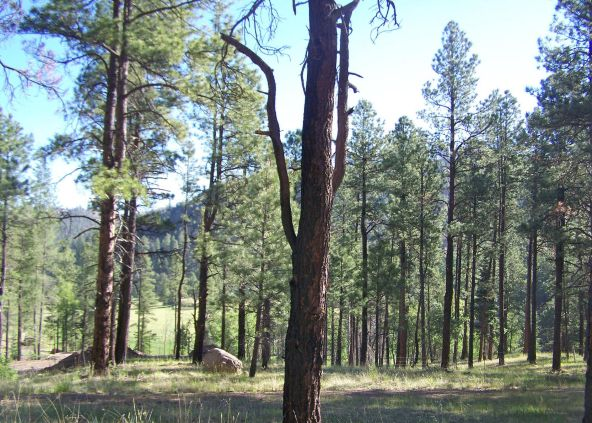 10 County Rd. 2153, Alpine, AZ 85920 Photo 4