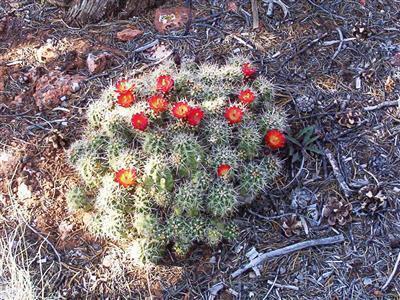 54867 N. Presidio Parkway, Seligman, AZ 86337 Photo 7