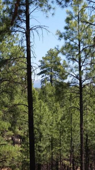 6300 W. Belle Springs Way, Flagstaff, AZ 86001 Photo 5