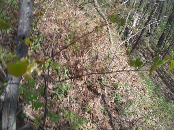 Plum Run Rd., Ridgeley, WV 26753 Photo 10