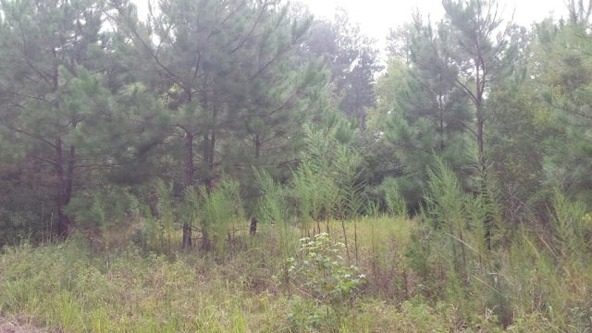 0 Lee Rd. 586, Smiths Station, AL 36877 Photo 3