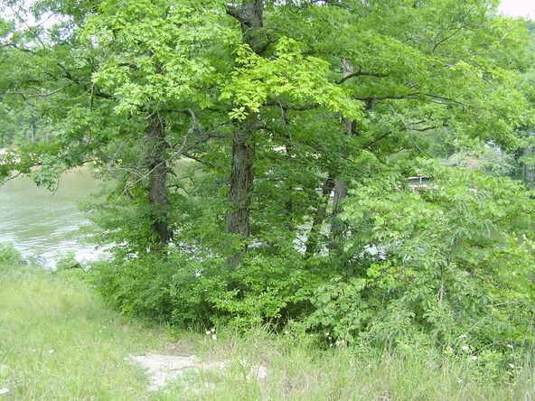1-2-3 Seawall Dr., Climax Springs, MO 65324 Photo 5