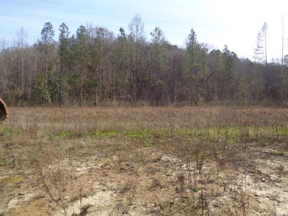275+/-Ac Cty Rd. 46/Cty Rd 97, Abbeville, AL 36310 Photo 33