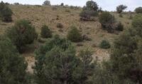 Home for sale: Unit 8, Lot 81 A, Ranchos del Vado, Tierra Amarilla, NM 87575