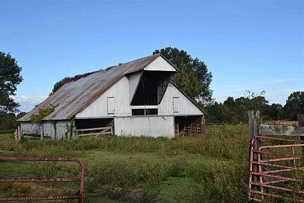 00 Sanders Bluff, Three Way, TN 38343 Photo 13