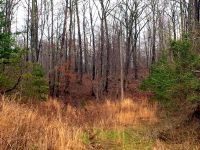 Home for sale: 9-Lot Dawn Dr., Morehead, KY 40351