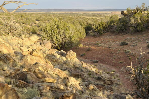 297 Woodridge Ranch, Concho, AZ 85924 Photo 13