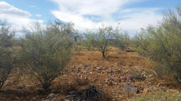 45### N. 8th Pl., New River, AZ 85087 Photo 3