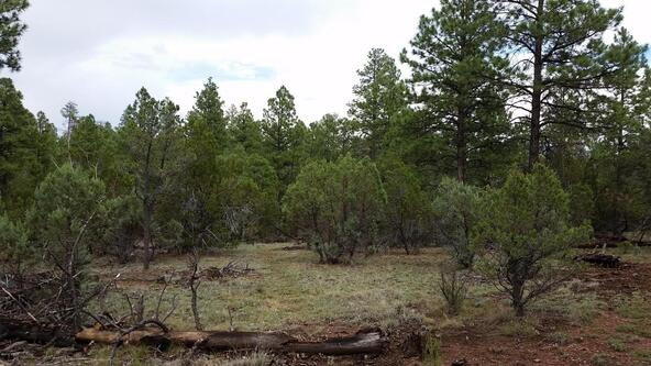 15.64 Ac Near Airport, Overgaard, AZ 85933 Photo 3