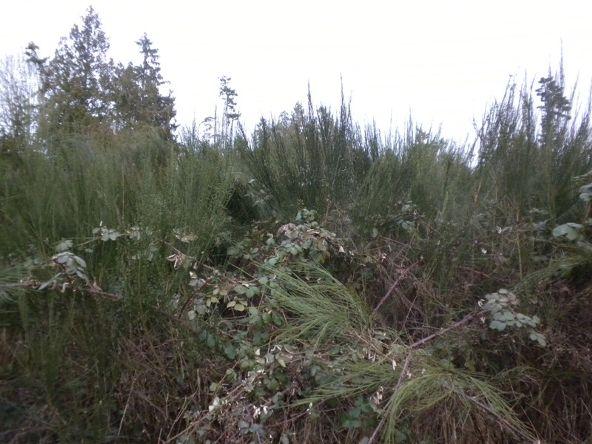 Indianola Rd. N.E., Poulsbo, WA 98370 Photo 2