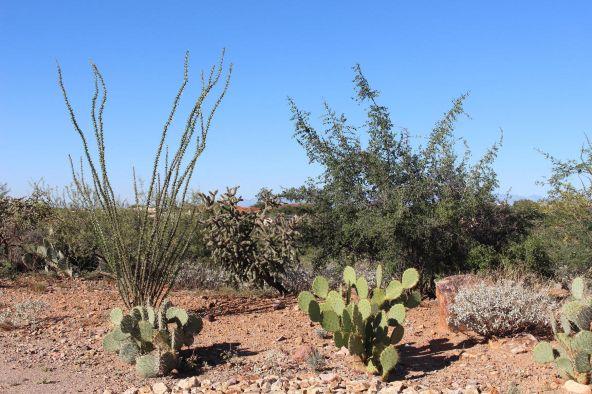 973 E. Sylvester Spring, Green Valley, AZ 85614 Photo 1