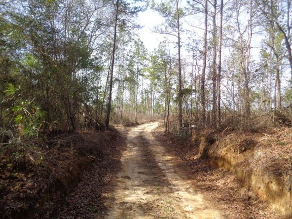 275+/-Ac Cty Rd. 46/Cty Rd 97, Abbeville, AL 36310 Photo 46