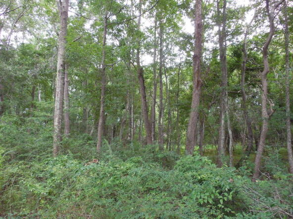 3 Acres Hwy. 103, Slocomb, AL 36375 Photo 8