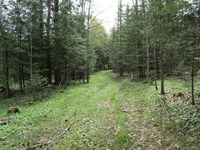 Home for sale: 41.25 Acres On Coveyville Rd., Phelps, WI 54554