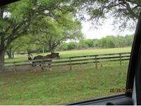 Home for sale: 32801 Us Hwy. 441, N. #12, Okeechobee, FL 34972