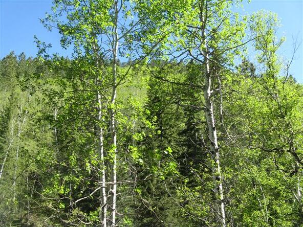 Cutting Mine Rd., Lead, SD 57754 Photo 38