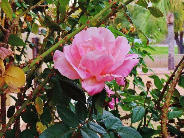 5139 E. Sharon Dr., Scottsdale, AZ 85254 Photo 40