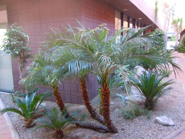 13215 N. Verde River Dr., Fountain Hills, AZ 85268 Photo 36
