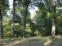 Home for sale: Lot 11 Rosehill Ln., Galena, MO 65656