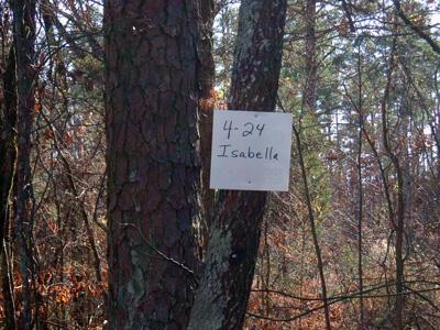 4/24 Isabella, Hot Springs Village, AR 71909 Photo 6