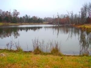 375 Greasy Creek, Salem, AR 72576 Photo 21