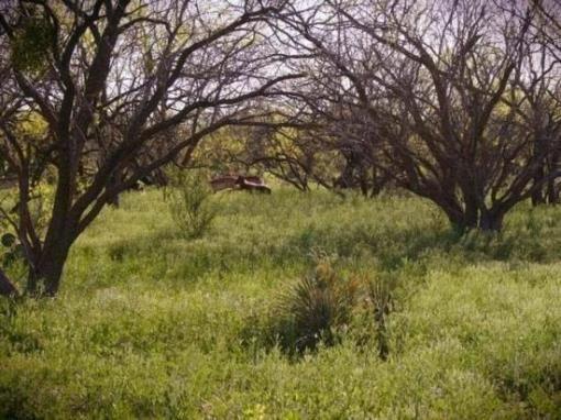 3 N. Hwy. 83, Eden, TX 76837 Photo 13