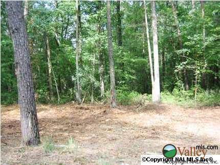 1 County Rd. 935, Mentone, AL 35984 Photo 3
