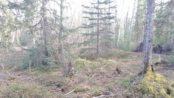 13238 W. Ellis White Cir., Wasilla, AK 99654 Photo 4