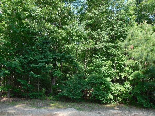 20+/- Acres Hwy. 431, Roanoke, AL 36274 Photo 5