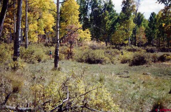 663 Usfs Rd. X Esmt, Pagosa Springs, CO 81147 Photo 15