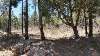 Home for sale: 2670 Lockwood Dr., Lakeside, AZ 85929