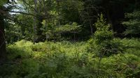 Home for sale: (Lot 1) State Route 55, Neversink, NY 12765