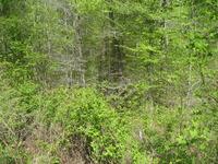 Home for sale: 13 Short Cedar Trail, Alexis, NC 28006