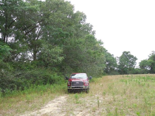7.8acres Hardy Rd., Rehobeth, AL 36301 Photo 22