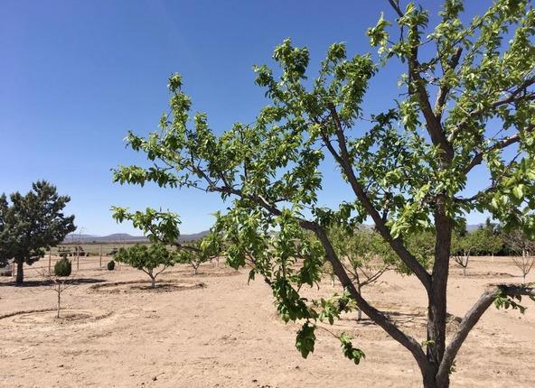 4075 W. Webb, Elfrida, AZ 85610 Photo 46