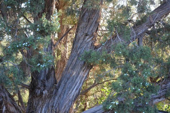 521 Bristlecone Pines Rd., Sedona, AZ 86336 Photo 2